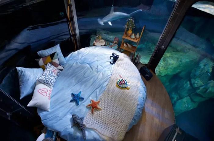 Aquário de Paris, na França, instalou 'quarto' em tanque de tubarões (Foto: Charles Platiau/Reuters)