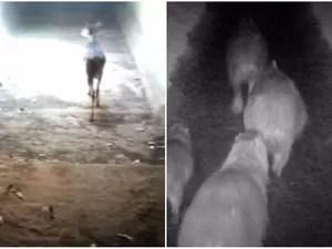 Câmeras flagram passagem de animais por túneis de rodovia (Foto: Reprodução/EPTV)