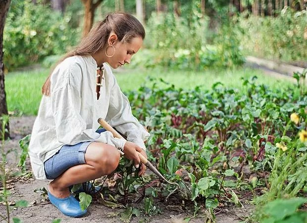Depois de pronto, o adubo produzido em casa pode ser colocado no seu jardim, na sua horta e até destribuído para suas amigas (Foto: Casa e Jardim)