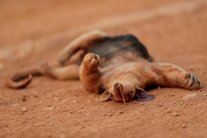 Foto mostra tamanduá morto depois de incêndio na Amazônia perto de Mirante do Norte, Rondônia, no dia 20 de agosto. — Foto: Ueslei Marcelino/Reuters