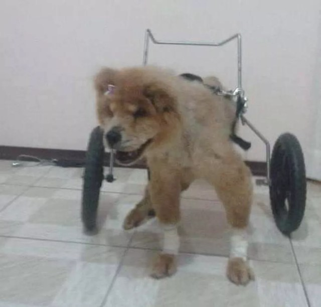 Mesmo com cadeira de rodas, Bela tinha dificuldade em andar e inspirou a criação de Lucas — Foto: Lucas Donaduzzi/Arquivo pessoal