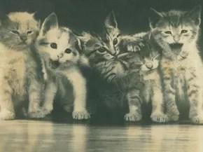 Edith Gaertner deixou registradas imagens dos gatos de que cuidava em Blumenau (Foto: Arquivo Histórico/FCBlu)
