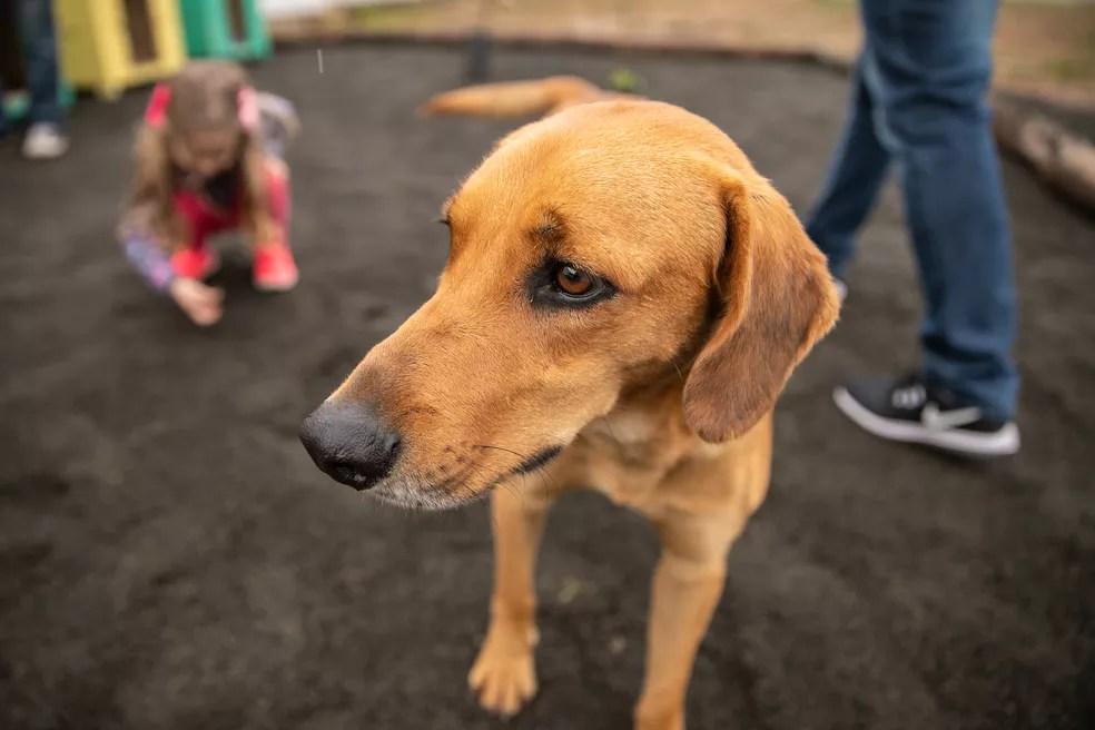 Cachorros recebem alimentação e cuidados de funcionários do bairro — Foto: Derli Colomo Jr./Prefeitura de Canoas