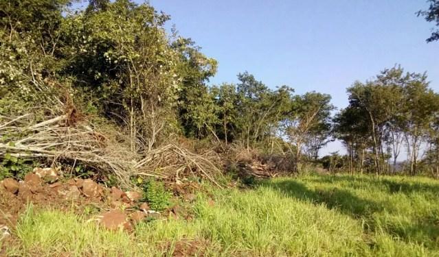 Área desmatada do cerrado — Foto: Polícia Militar de Meio Ambiente/Divulgação