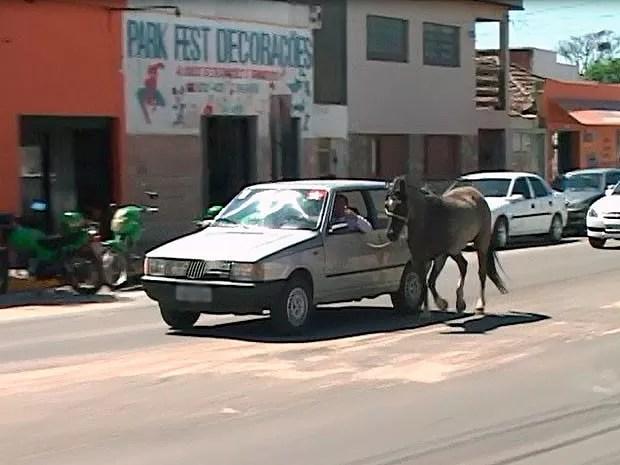 Motorista é flagrado rebocando cavalo no RS (Foto: Reprodução/RBS TV)