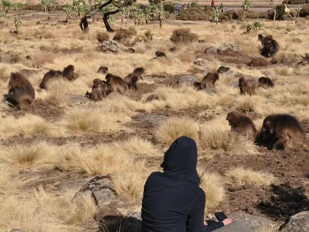 Larissa com os macacos na Montanhas Simien, na Etiópia (Foto: Arquivo pessoal)