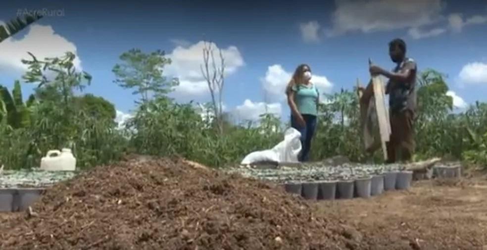 Depois de fazer a doação, seu João diz que já começou um novo plantio  — Foto: Reprodução/Rede Amazônica Acre