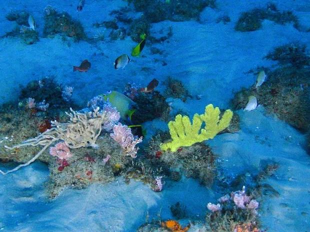 amapá; macapá; greenpeace; corais; rio amazonas; (Foto: ©Greenpeace)