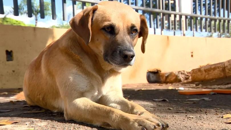 Zé Rico mora há quatros anos em cemitério de Mogi Guaçu (SP) e espera por adoção (Foto: Toni Mendes/Reprodução EPTV)