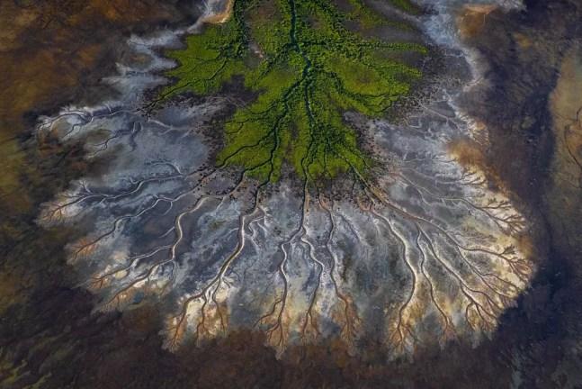 Manguezais verdejantes revestem as planícies de lama acentuadas pelas águas das marés e meses de chuva na Austrália.  — Foto: Scott Portelli / TNC Photo Contest 2021