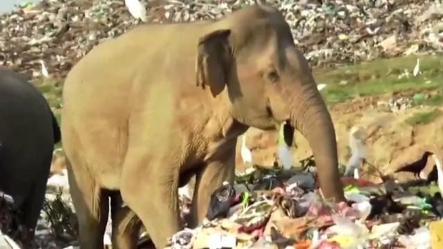 As imagens chocaram ambientalistas — Foto: Reuters via BBC