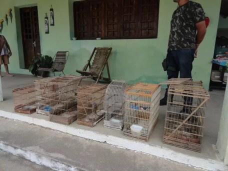 Aves foram resgatadas e materiais foram apreendidos pela CPRH (Foto: Divulgação/CPRH)