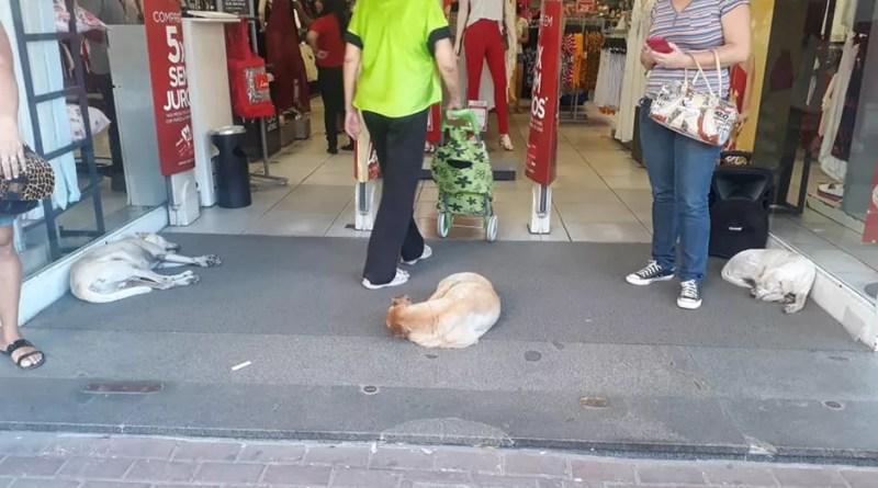 Loja Leader, em São Gonçalo (RJ), abre as portas para cachorros de rua (Foto: Reprodução)