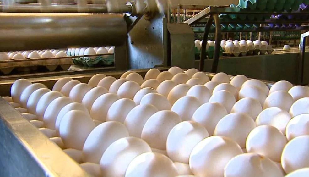 Produção de leite e ovos cresceu no estado. (Foto: Ely Venâncio/EPTV)