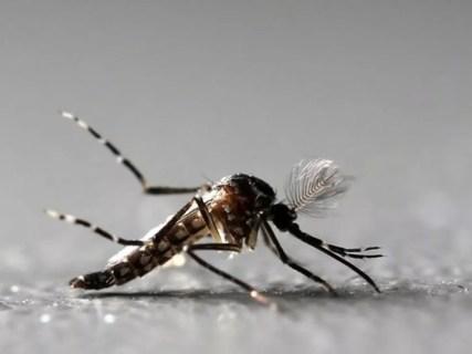 Mosquito Aedes aegypti é transmissor da dengue, zika e chikungunya (Foto: Paulo Whitaker/Reuters)