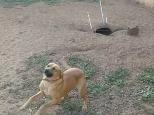Pandora até tentou enterrar uma churrasqueira (Foto: Arquivo Pessoal)
