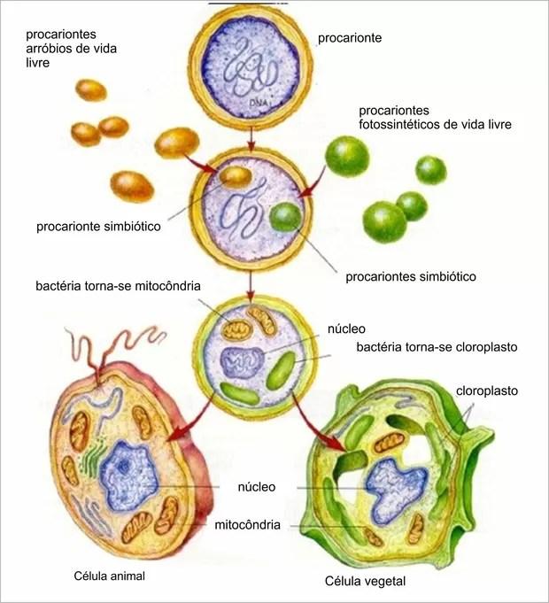 Origem e evolução das células e hipótese de endossimbiose (Foto: Reprodução)