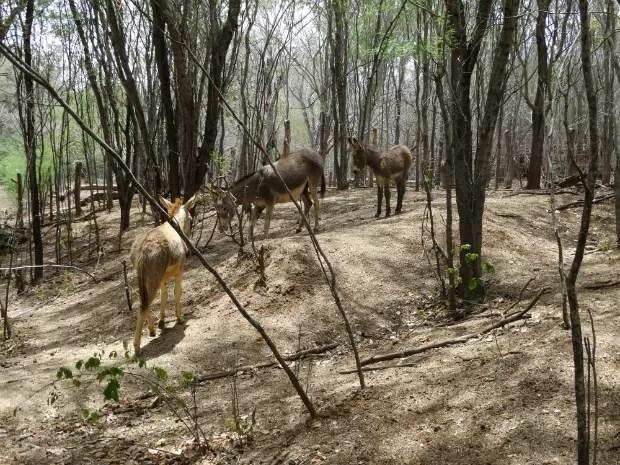 Animais estavam ao longo de 77 quilômetros da rodovia (Foto: Divulgação/Gestão Ambiental da BR-235/BA)