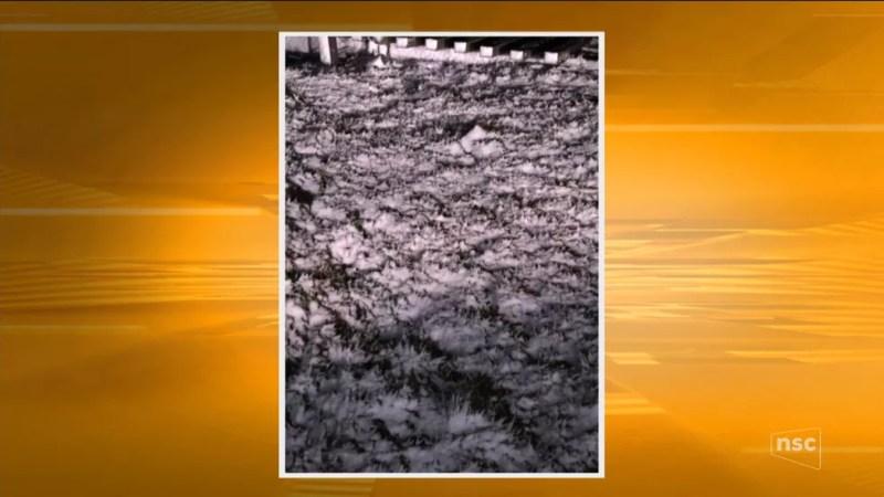 Registro de acumulado de neve na Serra catarinense (Foto: Reprodução/ NSC TV)