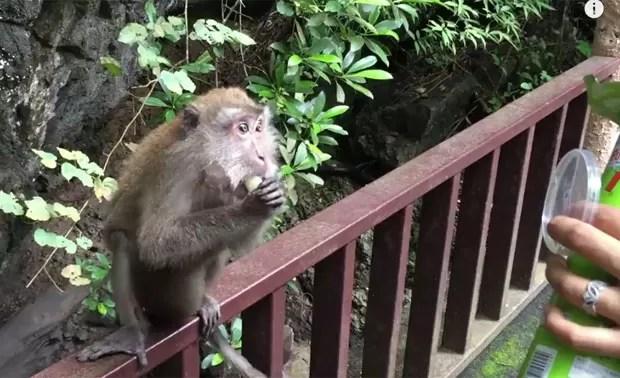 Cena ocorreu após mulher decidir alimentar macaca (Foto: Reprodução/YouTube/Liliana Corona)