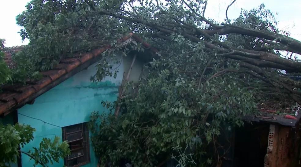 Uma árvore caiu sobre uma casa em Londrina, na tarde desta quinta-feira (31), sem maiores danos — Foto: Reprodução/RPC