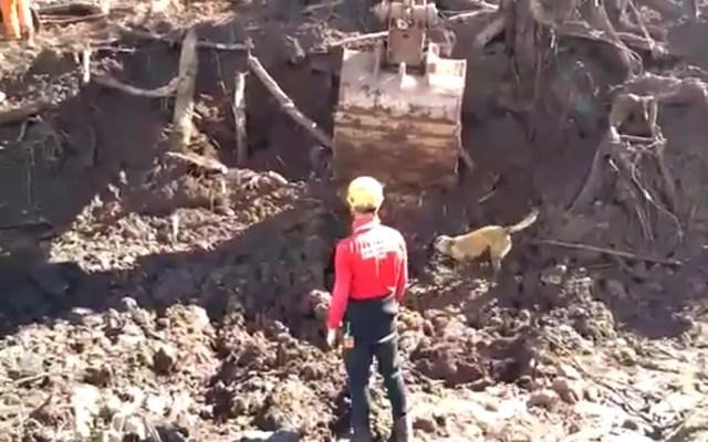 Bombeiros usam cães e máquinas na tentiva de localizar corpos em Brumadinho — Foto: Corpo de Bombeiros/Divulgação