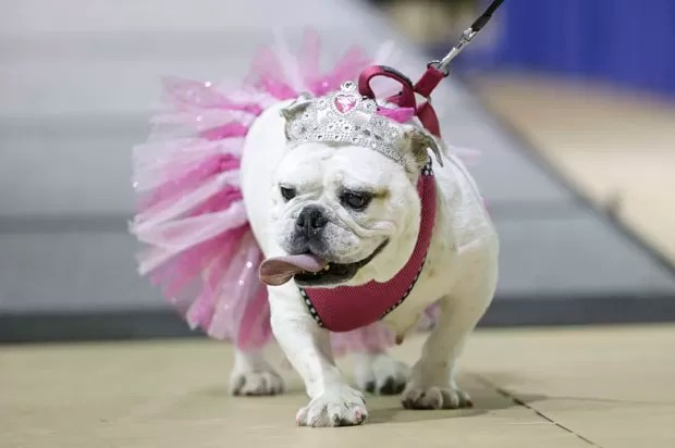 Drake Relays Beautiful Bulldog é realizado em Des Moines, no estado de Iowa (EUA) (Foto: Charlie Neibergall/AP)