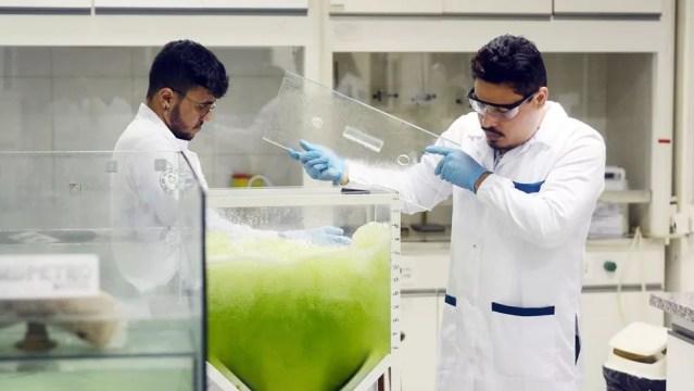 Na limpeza, a água contaminada entra em um tanque (reator) onde estão as microalgas, que se abastecem do carbono. Em seguida, a água limpa é liberada de volta no ambiente — Foto: VICTOR UCHÔA/BBC
