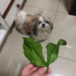 Verduras são opções ricas em nutrientes para os cães (Foto: Luciana Garcia/Arquivo Pessoal)