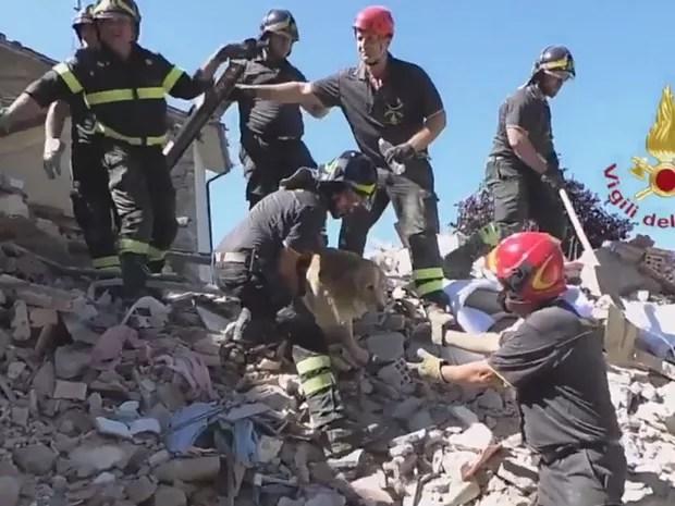 O golden retriever Romeo foi resgatado dos escombros da casa onde vivia em 2 de setembro, nove dias após o terremoto de Amatrice (Foto: Reprodução/Twitter/Vigili del Fuoco)
