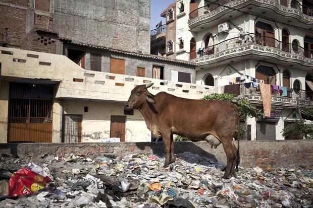 Exemplar de vaca, animal considerado sagrado na Índia, é visto em rua de Nova Déli. Gangues agem para roubar animais e vendê-los para consumo humano (Foto: Enrico Fabian/The New York Times)