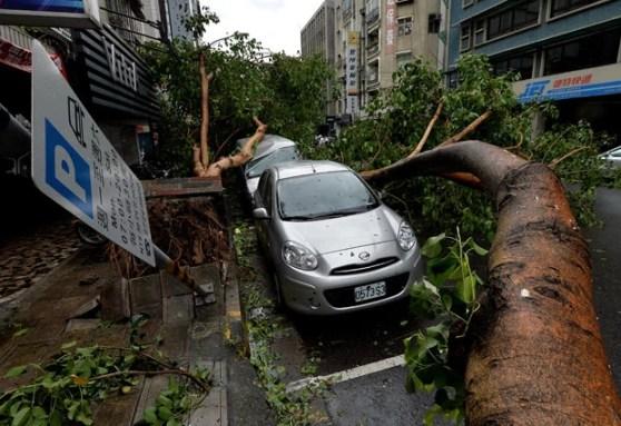 Carros danificados por árvores derrubadas pelo tufão Soulik neste sábado (13) em Taipei, Taiwan (Foto: Mark Ralston/AFP)