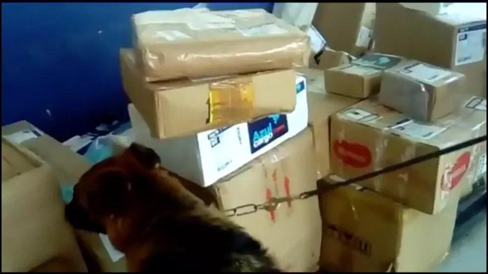 Cão farejador deu sinal para que polícia encontrasse carga com 11 fuzis no aeroporto Santos Dumont — Foto: Reprodução / TV Globo
