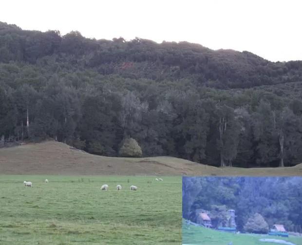 Detalhe mostra casa construída para cenário de 'O Hobbit' ao lado de árvore em floresta em Glenorchy (Foto: Juliana Cardilli/G1)
