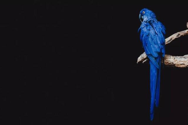 O Brasil tornou-se o primeiro país da América do Sul a proibir, por lei, o comércio de animais silvestres. — Foto: Unsplash