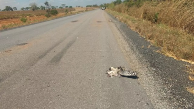 Motorista informou que tentou desviar de um pássaro (Foto: Divulgação)
