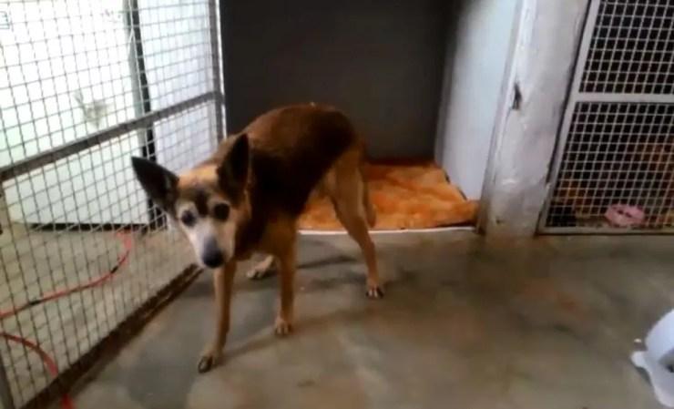 Cachorro resgatado em bairro de Botucatu se recupera em Canil Municipal e esta à espera de adoção (Foto: Canil Municipal / Divulgação)