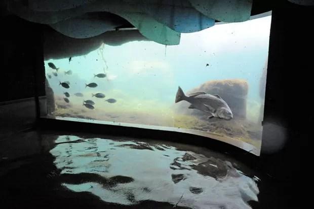 Aquário de Nova York está alagado (Foto: Julie Larsen Maher/WCS/Divulgação)