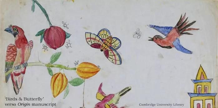 Desenhos feitos pelo cientista durante sua pesquisa sobre seleção natural (Foto: Reprodução)