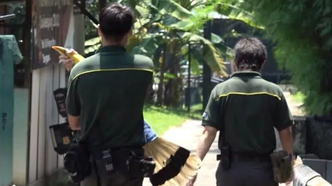 A ave recebeu alta em setembro (Foto: WILDLIFE RESERVES SINGAPORE via BBC News Brasil)