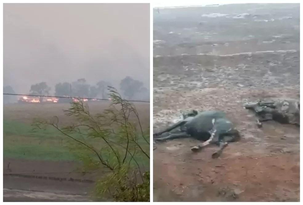 Queimada deixou mortos em Santo Antônio do Aracanguá  — Foto: Arquivo pessoal