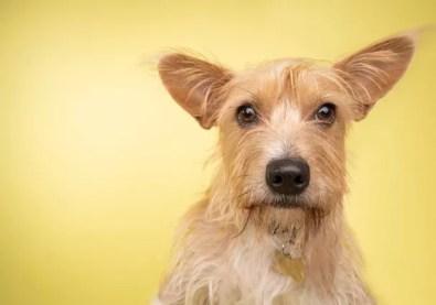Cachorro vira-lata não fica doente? Mitos e verdades sobre pets SRD - Revista Glamour | Lifestyle