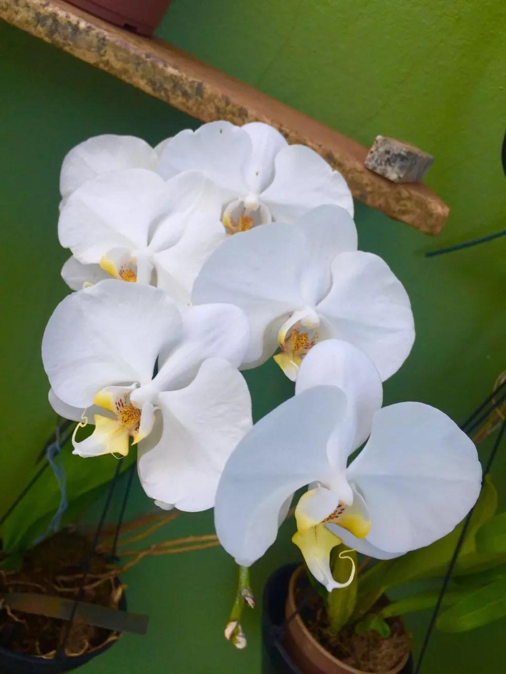 Maria Nunes dos Reis, do Bairro Jardim Patricia, em Uberlândia enviou fotos das flores da casa dela. (Foto: Maria Nunes dos Reis/Arquivo Pessoal)