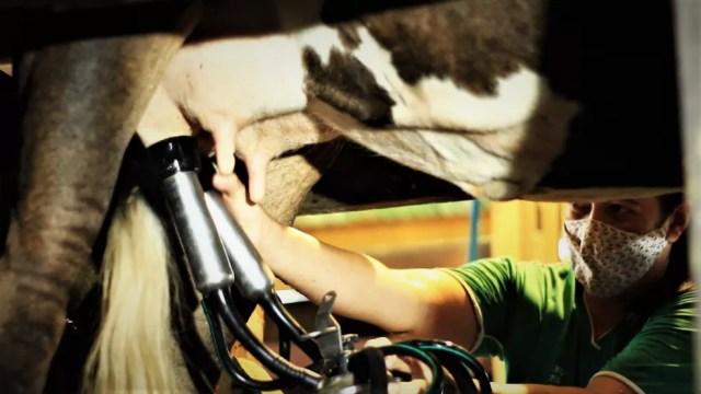 Produção do leite em Rondônia. — Foto: Seagri/Divulgação
