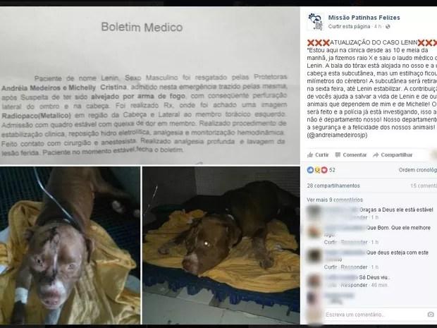Redes de proteção resgatara o cachorro (Foto: Reprodução/Facebook)