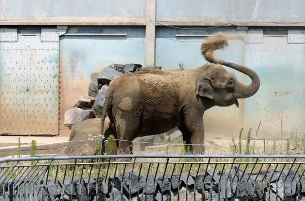 Baby, um dos elefantes ameaçados, em 11 de julho em zoo de Lyon, na França (Foto: AFP)