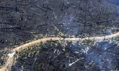 Área queimada para pastagem de gado em Novo Progresso, no Pará (Foto: Nacho Doce / Reuters)