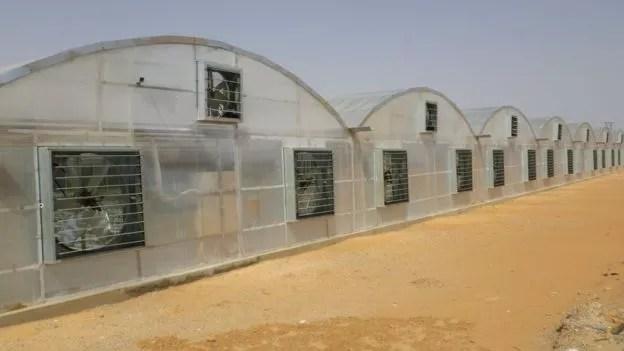 BBC: Tecnologia japonesa permite produção de tomate no meio do deserto, como este em Dubai (Foto: DIVULGAÇÃO/MEBIOL VIA BBC)