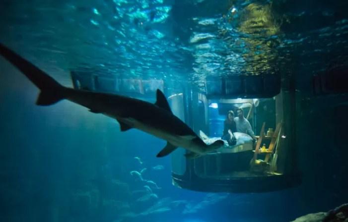 Hanah e Alastair dormiram em quarto subaquático cercado por 35 tubarões (Foto: Michel Euler/AP)