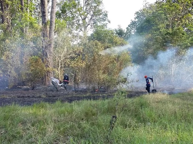 Em Barreirinha, equipes do Corpo de Bombeiros combatem as queimadas (Foto: Divulgação/Corpo de Bombeiros)